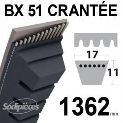 Courroie BX51 Trapézoïdale crantée. 17 mm x 1362 mm.