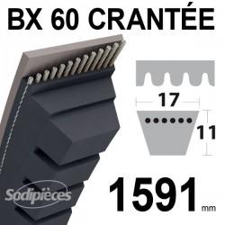 Courroie BX60 Trapézoïdale crantée. 17 mm x 1591 mm.