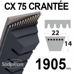 Courroie tondeuse CX75 Trapézoïdale 22 mm x 1905 mm.